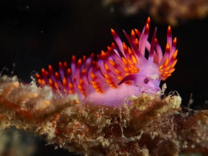 sea-slug-33