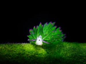 sea-slugs-1