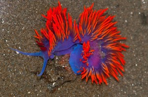 sea-slugs-14