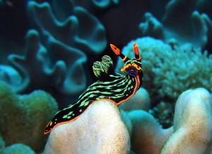 sea-slugs-19