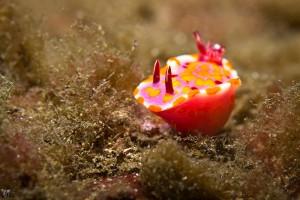 sea-slugs-24