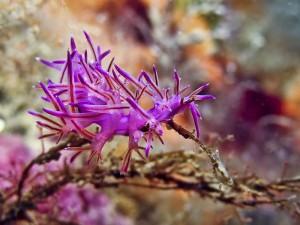 sea-slugs-35