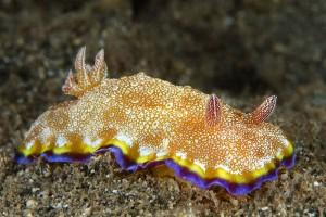 sea-slugs-40