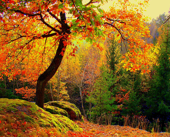 autumn_forest_trees