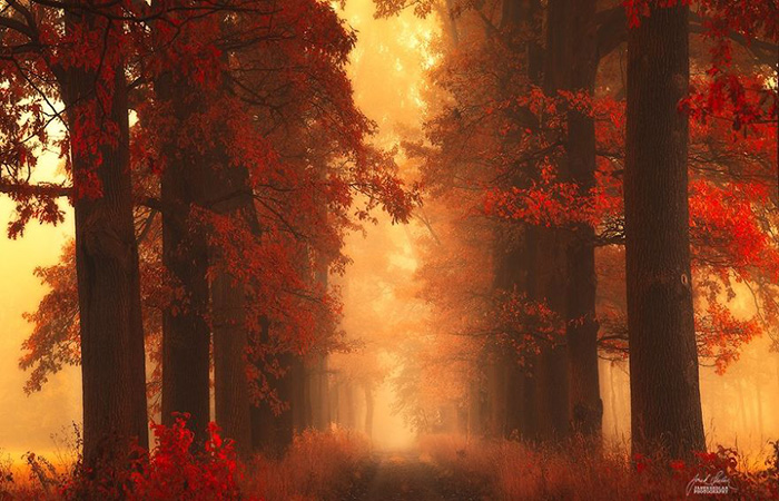 dreamlike-autumn-16