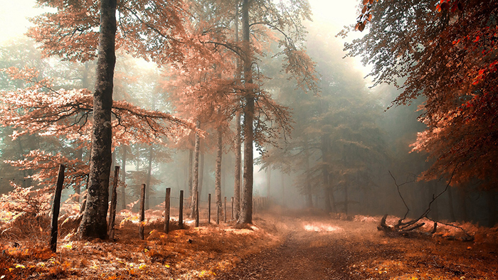 road-in-a-mystical-autumn-forest
