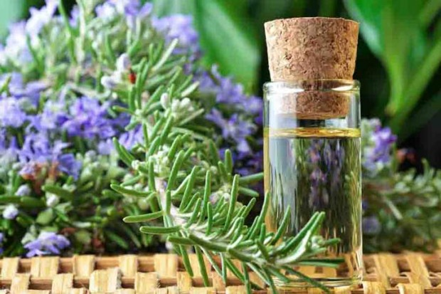 rosemary-essential-oil-bottle-620x413