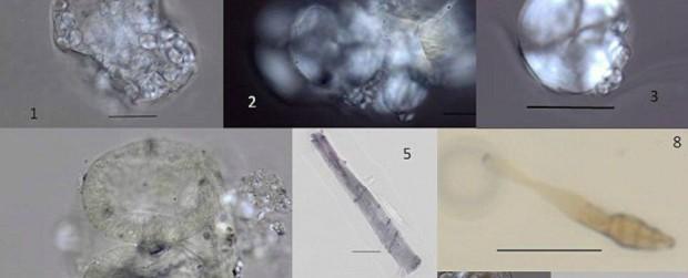 microfossilsheader_1024-620x251