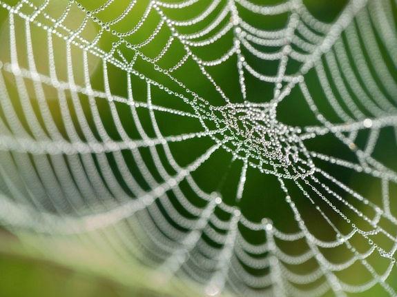 spider-web-121129